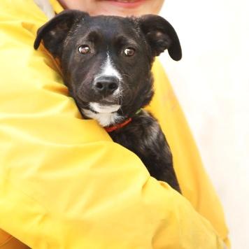 Щенок Бети - Собаки в добрые руки