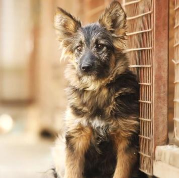 Щенок Моника - Собаки в добрые руки