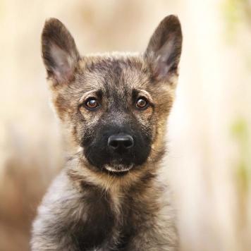 Щенок Боня - Собаки в добрые руки