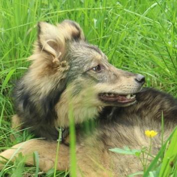 Лёля - Собаки в добрые руки