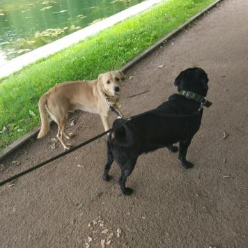 Арчи и Мазай - Собаки в добрые руки