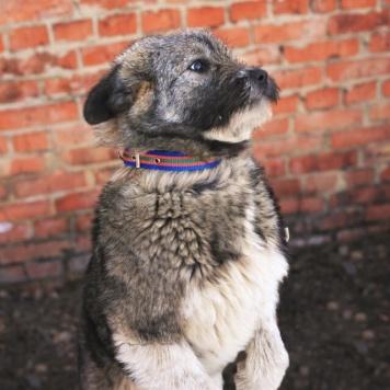Лэсси - Собаки в добрые руки
