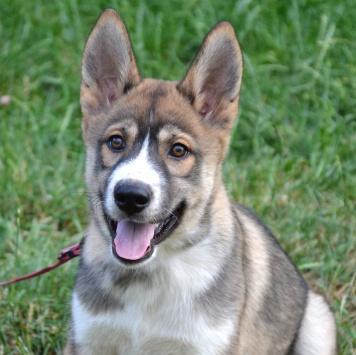 Мирра - Собаки в добрые руки