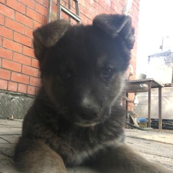 Ватрушка - Собаки в добрые руки