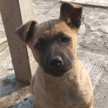 Марселла - Собаки в добрые руки