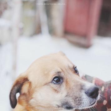 Венечка - Собаки в добрые руки