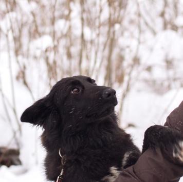 Руша - Собаки в добрые руки