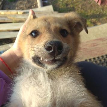 Даги - Собаки в добрые руки