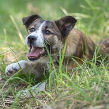 Тайна - Собаки в добрые руки