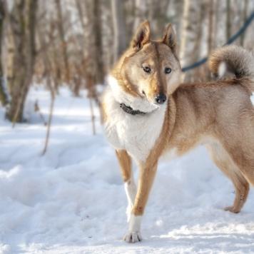 Стрелка - Собаки в добрые руки