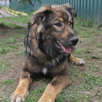 Бастер - Собаки в добрые руки