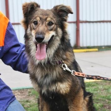 Бильбо - Собаки в добрые руки