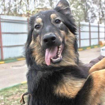 Верона - Собаки в добрые руки