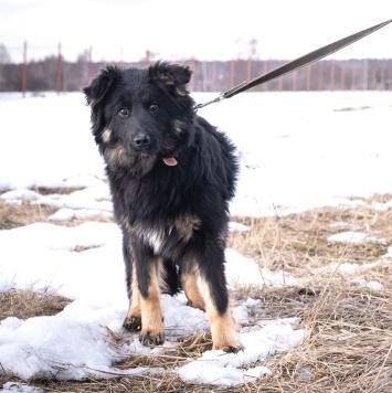 Лорик - Собаки в добрые руки