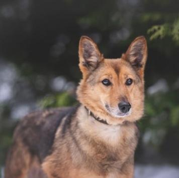 Амалия - Собаки в добрые руки