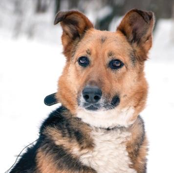 Слива - Собаки в добрые руки