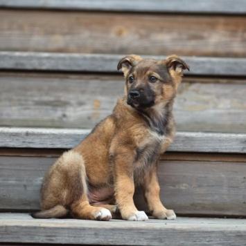 Бруняша - Собаки в добрые руки