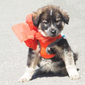 Михална - Собаки в добрые руки