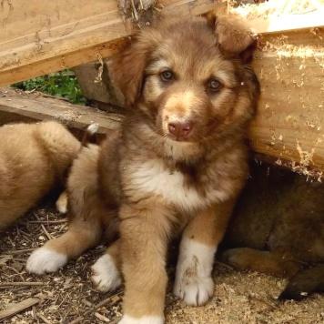Бадди - Собаки в добрые руки