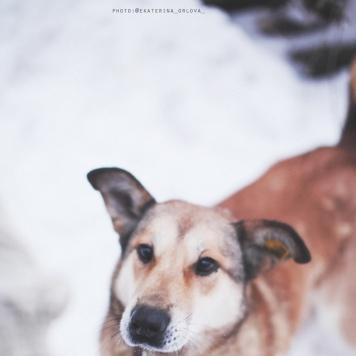 Дафна - Собаки в добрые руки