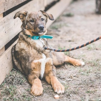 Лoтта - Собаки в добрые руки
