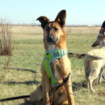 Цефа - Собаки в добрые руки