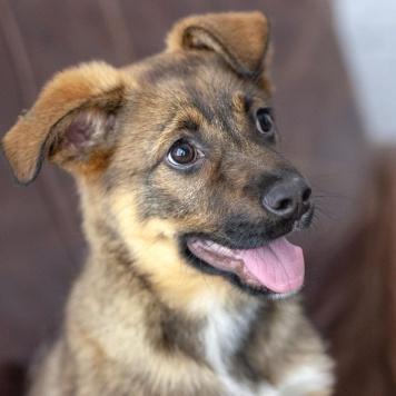 Шура - Собаки в добрые руки