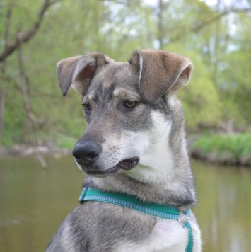 Кардан - Собаки в добрые руки