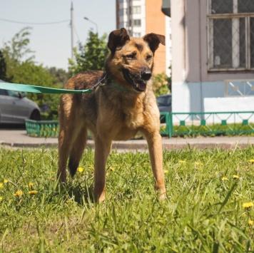 Добрик - Собаки в добрые руки