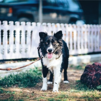 Рокси - Собаки в добрые руки