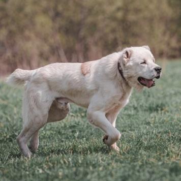 Кирсан - Собаки в добрые руки