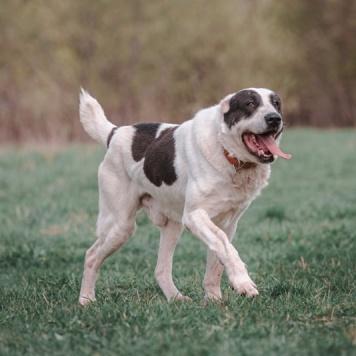 Перс - Собаки в добрые руки