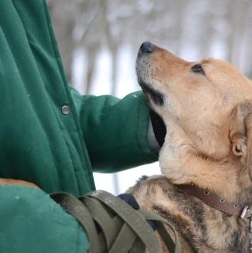 Ада - Собаки в добрые руки