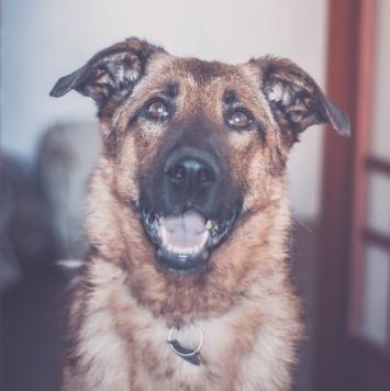 Кьяра - Собаки в добрые руки