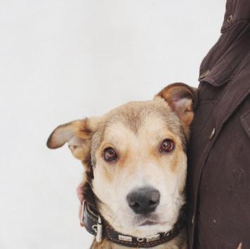 Молли - Собаки в добрые руки