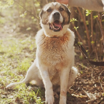 Катя - Собаки в добрые руки