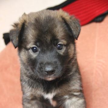 Адель - Собаки в добрые руки