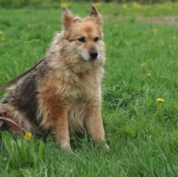 Гуара - Собаки в добрые руки