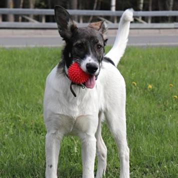 Дарья - Собаки в добрые руки