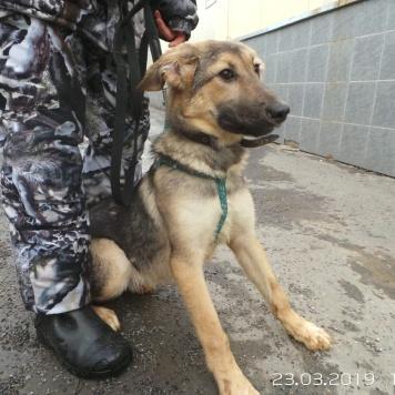 Дарина - Собаки в добрые руки