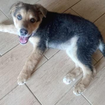 Дункан - Собаки в добрые руки