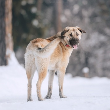 Арья - Собаки в добрые руки
