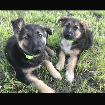 Черныш и Ушастик - Собаки в добрые руки
