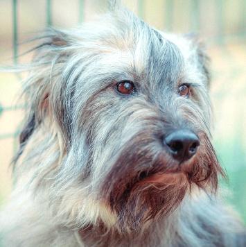 Мина - Собаки в добрые руки