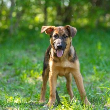 Арчик - Собаки в добрые руки