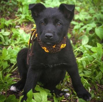 Смоки - Собаки в добрые руки