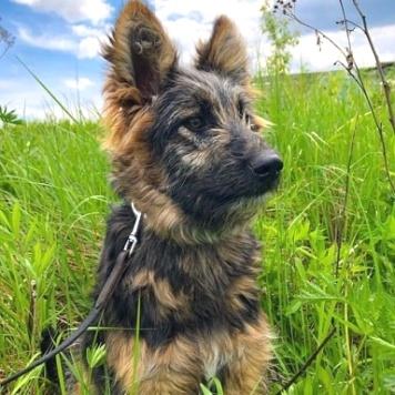 Щенок Шейла - Собаки в добрые руки