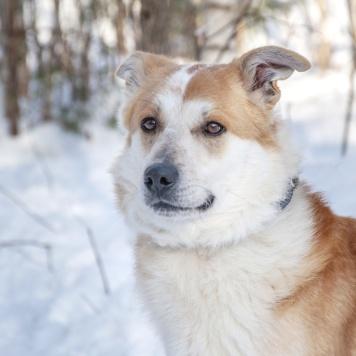 Лисс - Собаки в добрые руки