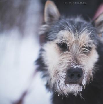 Боря - Собаки в добрые руки