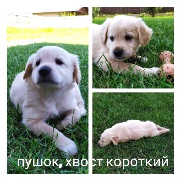 Пушок - Собаки в добрые руки